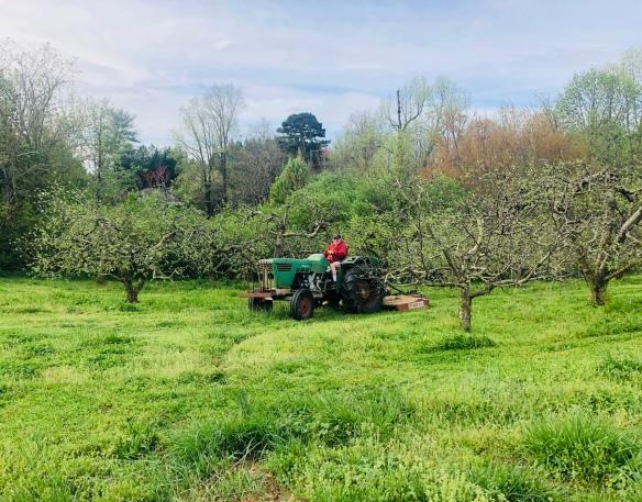 Mowing Apples.JPG